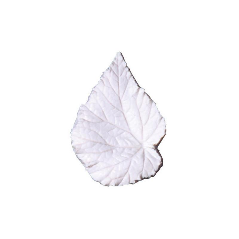 Leaf Veiner Begonia Rex, M - Squires Kitchen